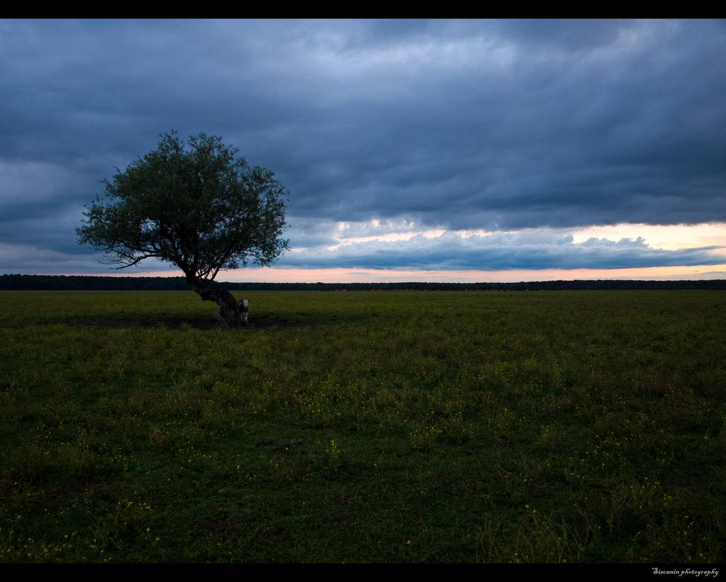 Landscape07 by siscanin