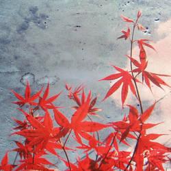erable.japonnais by ShadyMedusa