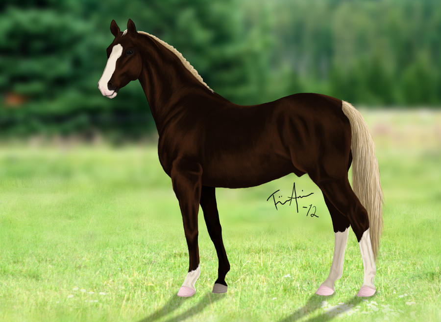 Chestnut Horse - photo#32
