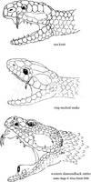Snake Fangs by changewinds