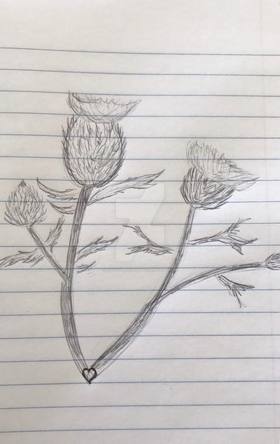 Thistles Sketch by navcallahan