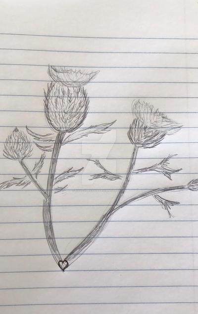 Thistles Sketch by navcallahan