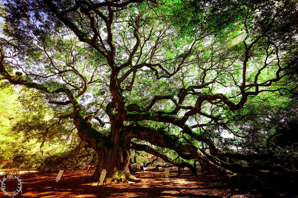 The Angel Tree by magicfirefly