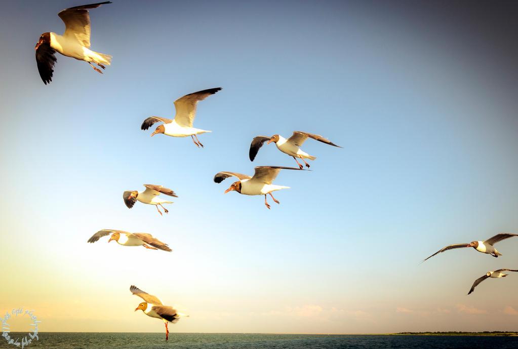 Gulls by magicfirefly