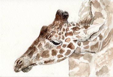 Giraffe [Thank you note #4] by JackSephton