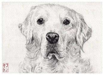 Levi Portrait [Golden Retriever Pet Commission] by JackSephton
