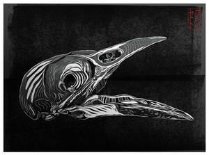 Magpie Skull