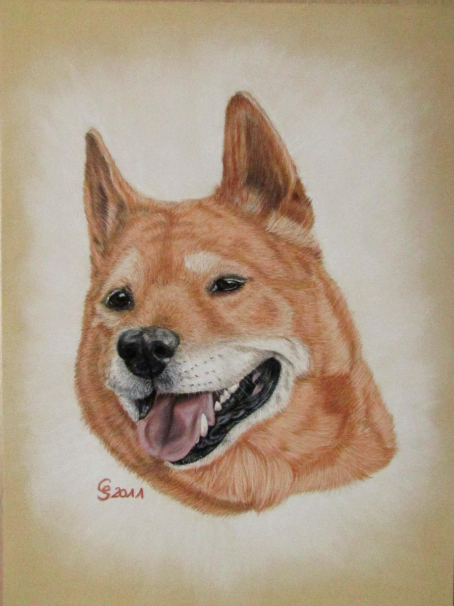 dogheaven... by Vitadog
