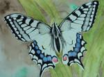 butterfly by JettieHier