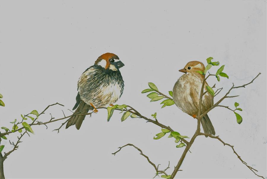 Watercolour birds by JettieHier