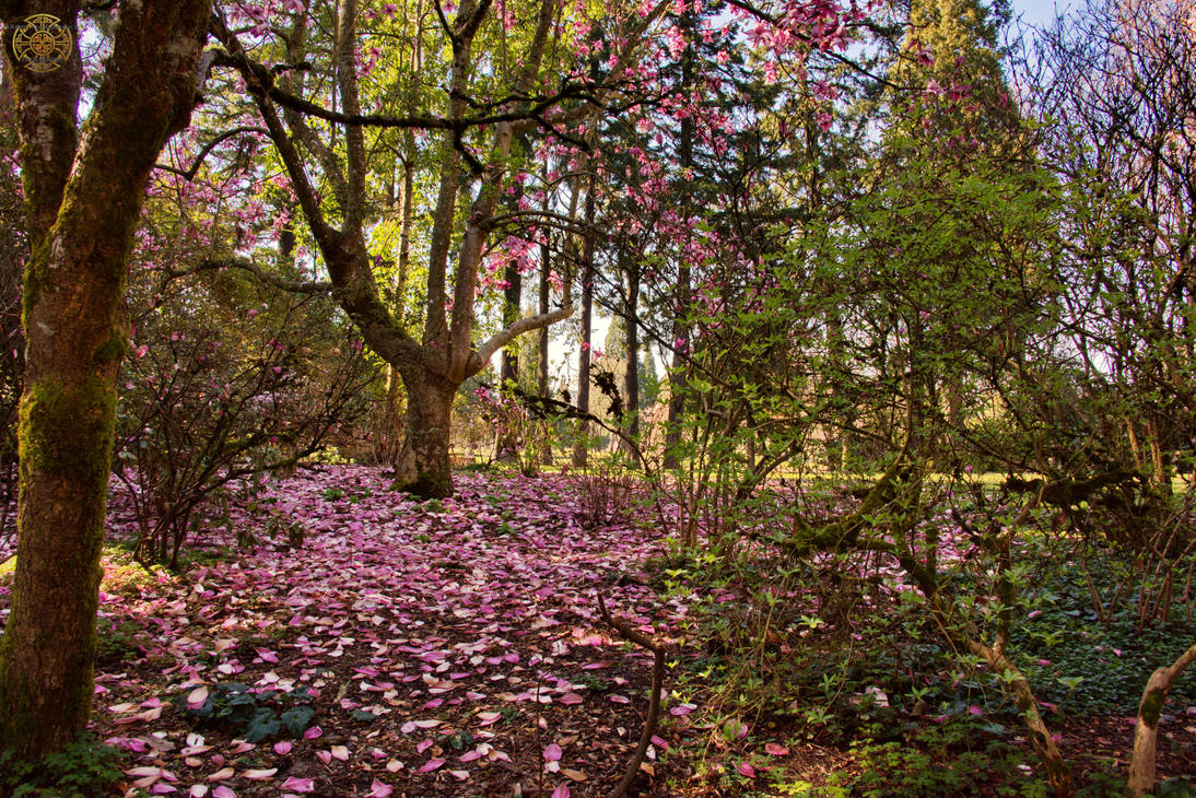 Image Result For Crystal Springs Rhododendron Garden