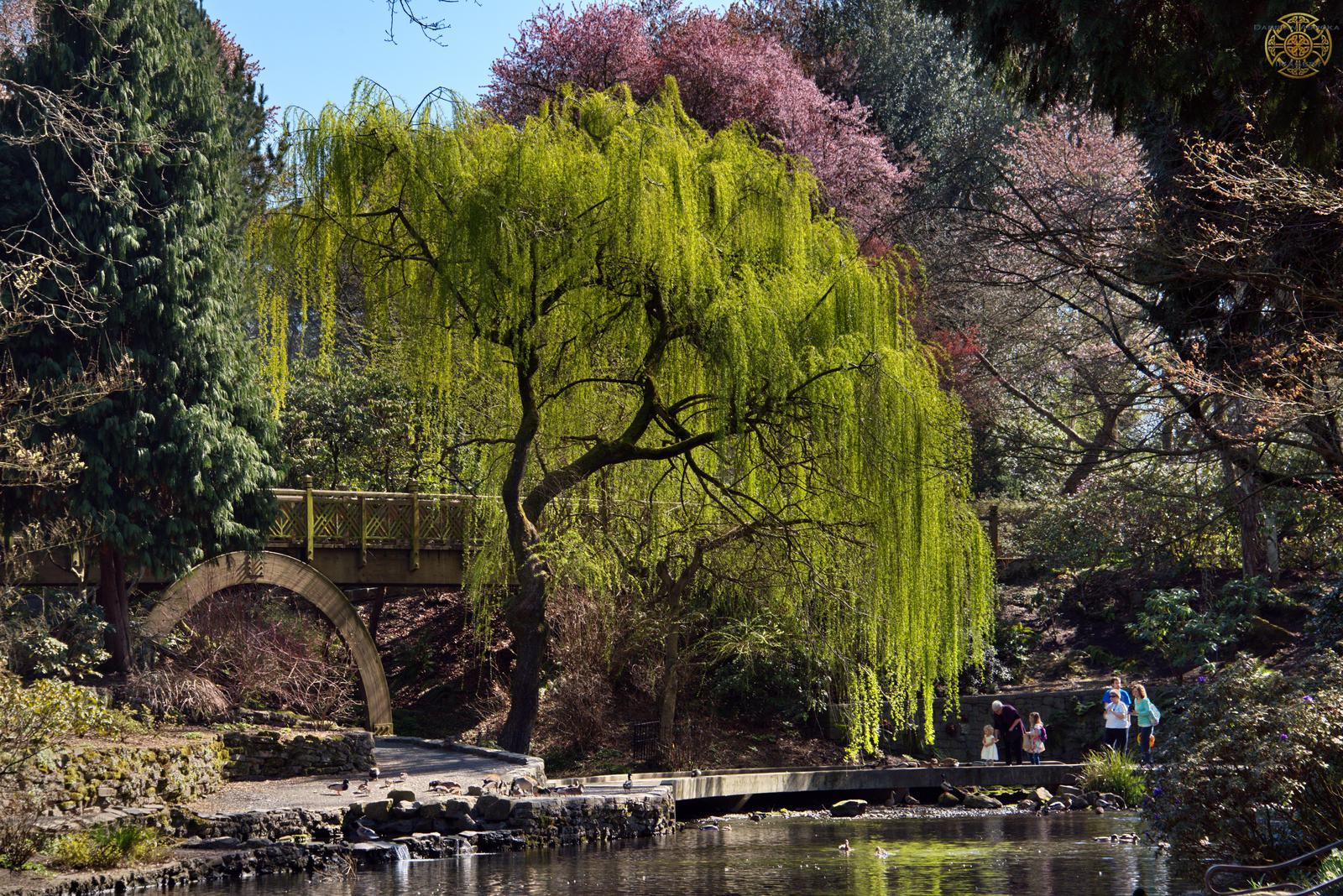 Crystal springs rhododendron garden 102 by darrian ashoka on deviantart for Crystal springs rhododendron garden