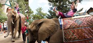 elephants never forget by ColinPortfolio