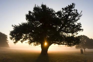 Sunrise tree by gregbajor