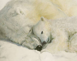 Polar Bear - Mother's Love