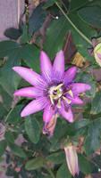 flower 1 by calvincanibus