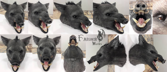 Wild Boar trophy commission for Kanyu Escape