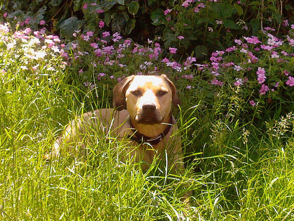 My pet dog Honey by BrainiacAdam