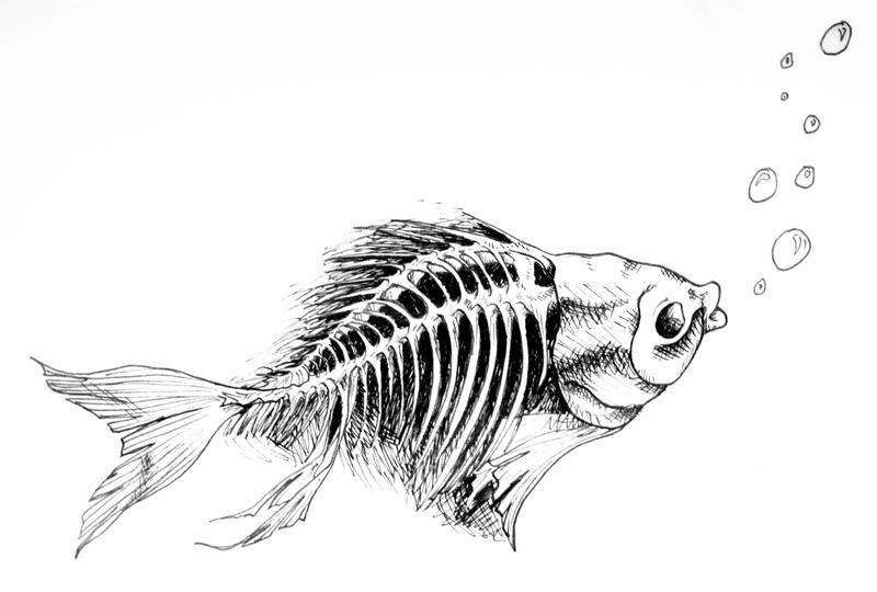 Fish Skeleton Drawing Fish Skeleton Drawing