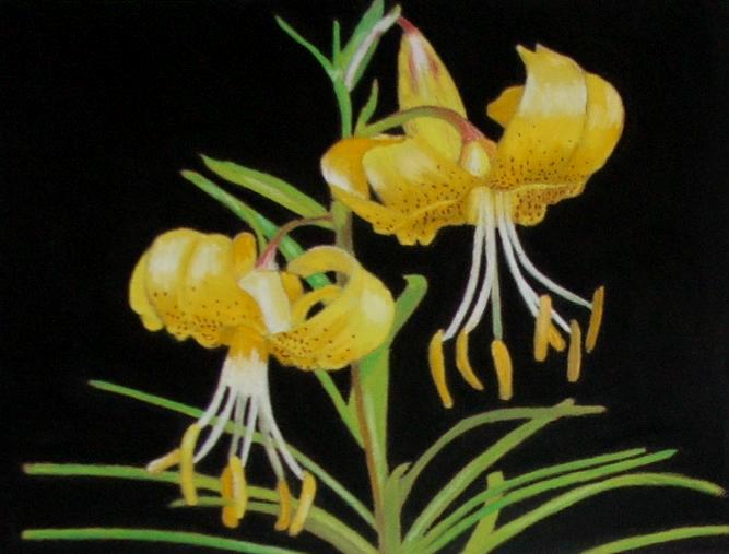 Lilies by Pygar