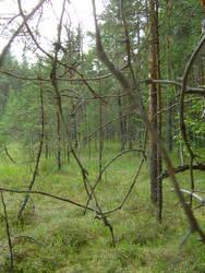 A swamp by Regen-Lena
