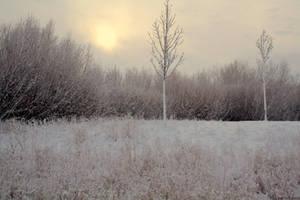 Winter Field by greychampion