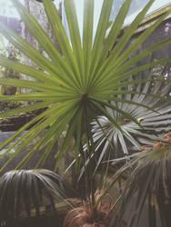 Palm by JwCorrea