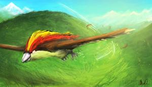 Pidgeot by Banmal