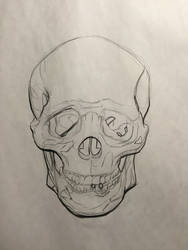 Skull Study Front