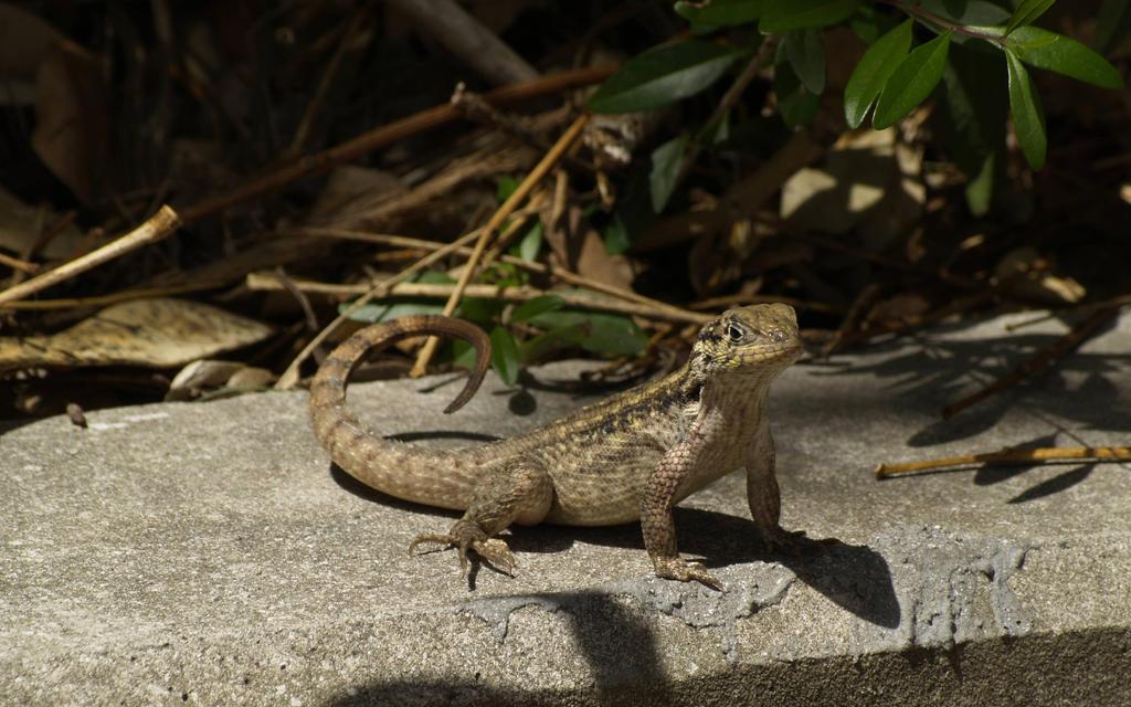Thin Lizard by towel401