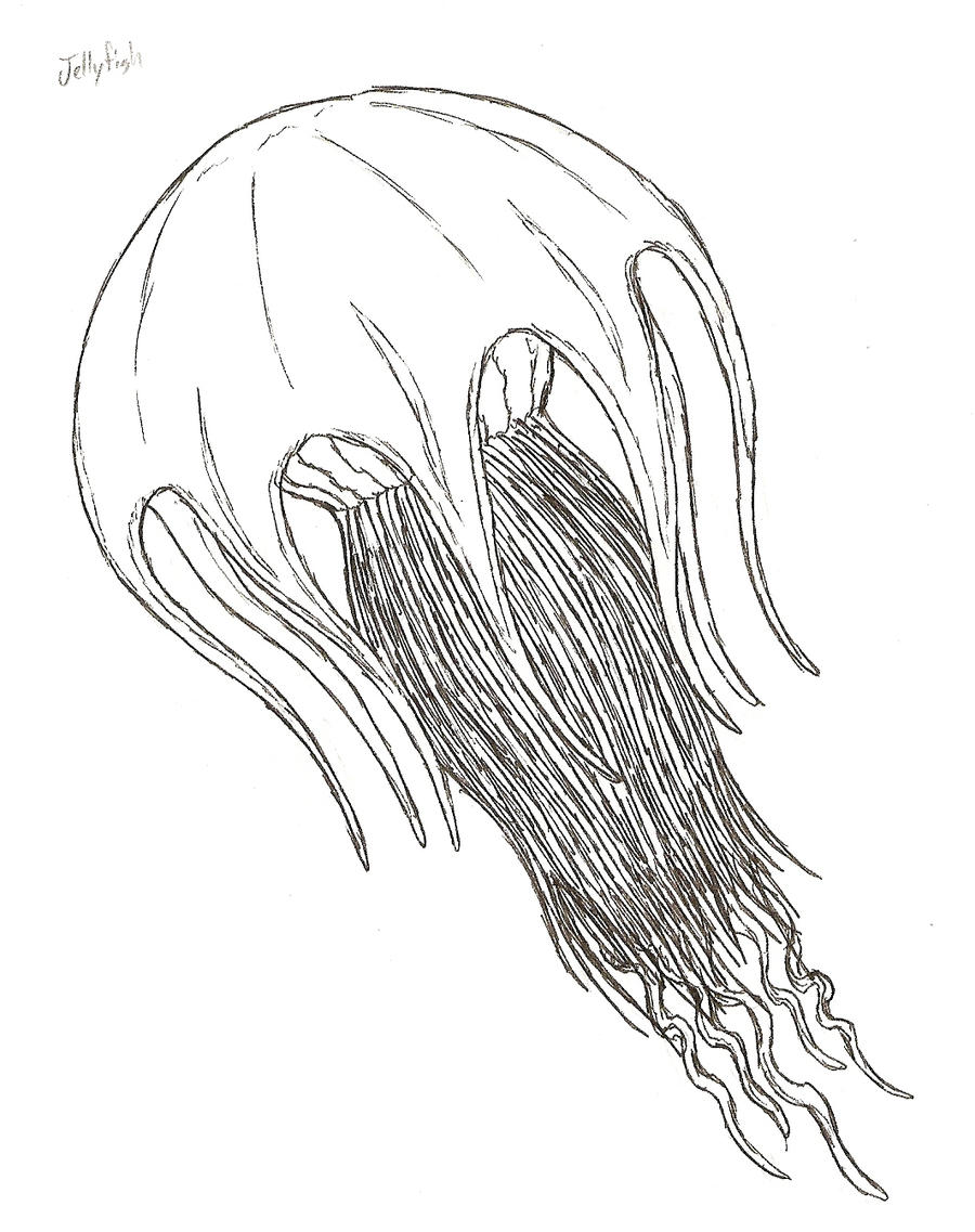 Line Art Jellyfish : Jellyfish by kitwhitham on deviantart