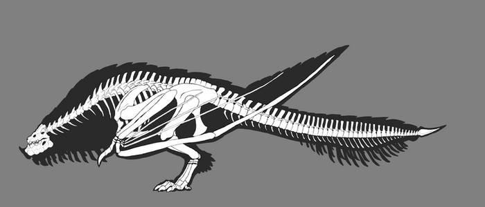 Bazelgeuse Skeleton