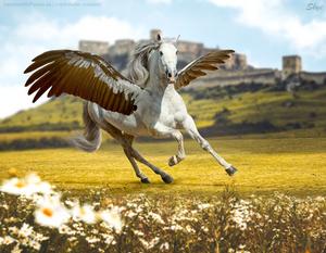 HEE    On Golden Wings