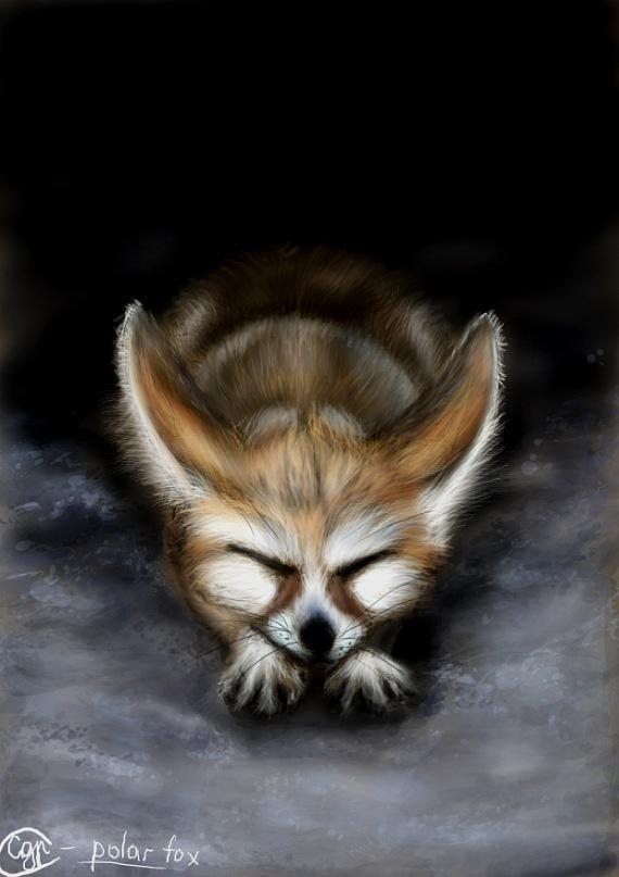 Vulpes zerda by SvPolarFox