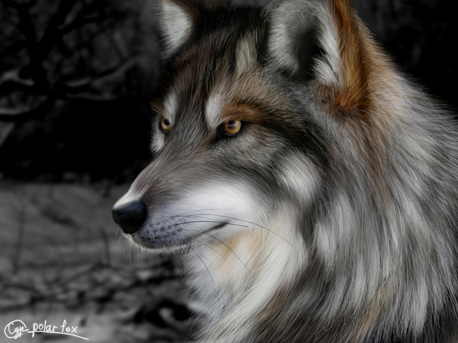 Gray Wolf (Canis Lupus) In Winter Stock Photo, Picture And Royalty ...