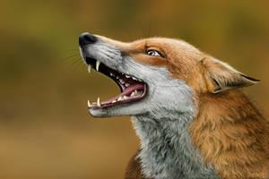 Fox by SvPolarFox