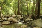 Cedar Creek.2_Mind-Matter