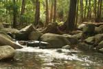 Cedar Creek.4_Mind-Matter