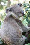 Koala_Mind-Matter