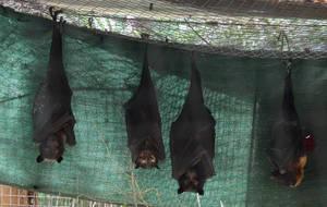 Fruit Bats_Mind-Matter by Mind-Matter