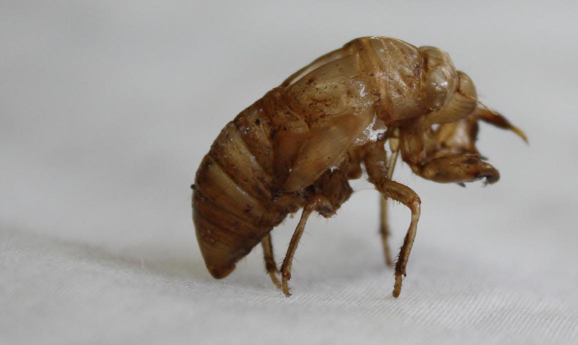 Cicada Shell.3_Mind-Matter by Mind-Matter on deviantART