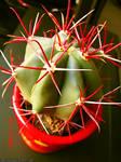 Fierce Cactus 3