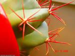 Fierce Cactus 4