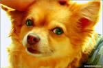 Tender Little Canine