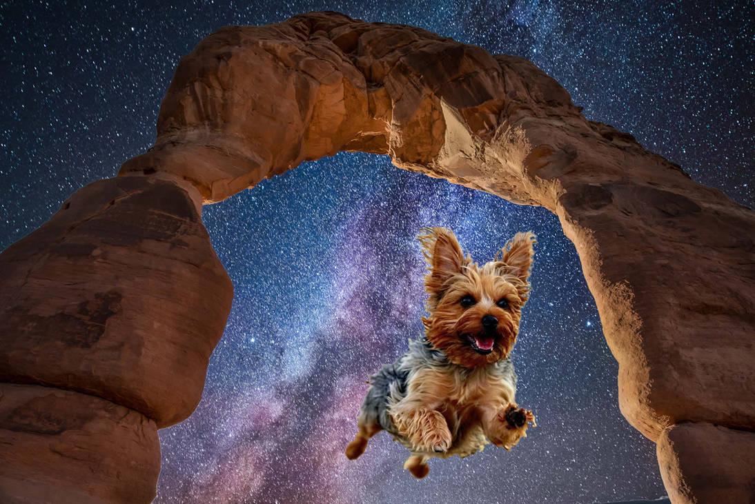 Yorkie Flying Under Milky Way by starwitchstone