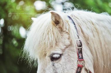 Lif - Icelandic mare by DumbassWithoutBrains