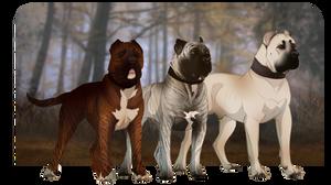 Boofy Doggos