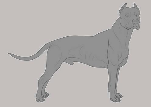 Dogo Argentino Lines