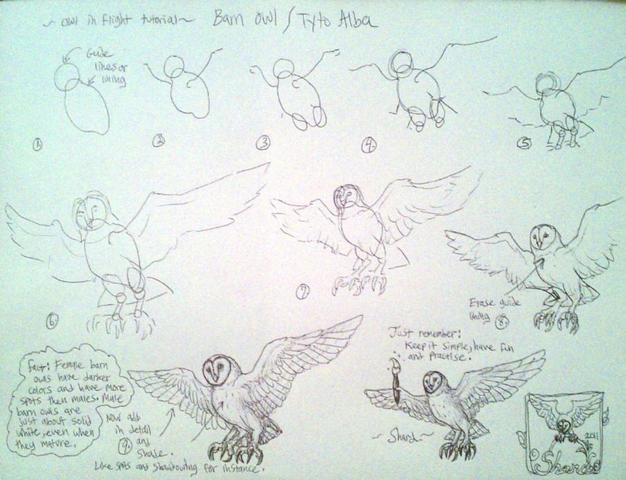 Line Drawing Tutorial : Line draw barn owl in flight tutorial by iggyseymour on