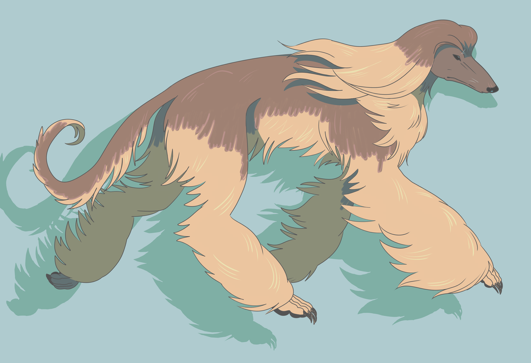 Afghan Hound by rimonade